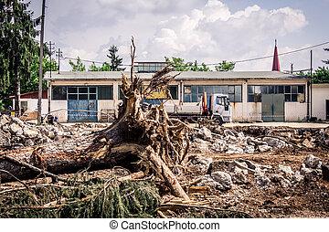 arbre tombé, racines
