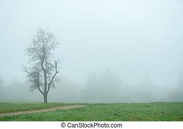 arbre, une, automne, park., fog., matin