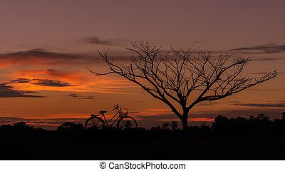 arbre, vélo, silhouette, mort