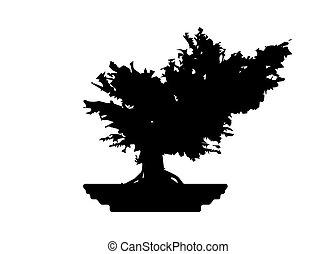 arbre, vecteur, image., icônes, blanc, silhouette, isolé, plante, japonaise, pot., fond, , détaillé, bonsai, noir