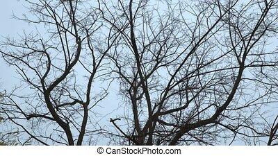 arbre, vent, branches nues