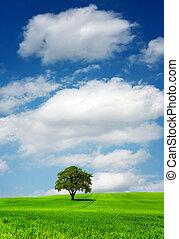 arbre vert, champ