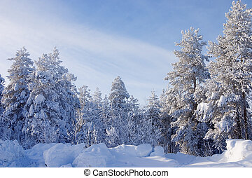 arbre vert, fourrure, pins, neige, arbres, veille, couvert, noël