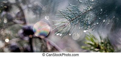 arbre vert, gouttes pluie, brindille, arbre, givré