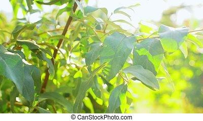 arbre, vert, grand plan, branches, feuilles