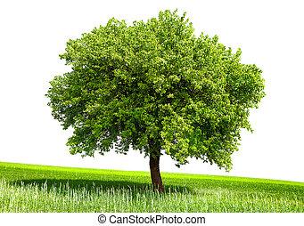 arbre vert, isolé