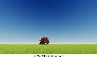 arbre, vert, nature, arrière-plan., unique