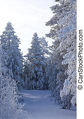 arbre vert, pins, neige, veille, couvert, fur-trees, noël