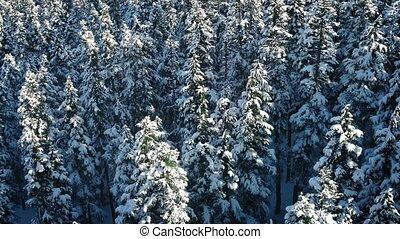 arbre vert, sur, vol, arbres, neigeux
