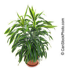 arbre vert, usines, perpétuel, -, chlorophytum, fleurir
