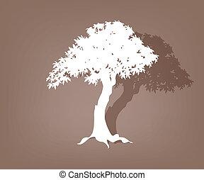 arbre, vieux, contour