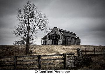 arbre, vieux, hiver, grange