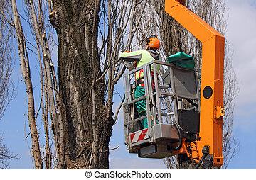 arbres, émondage