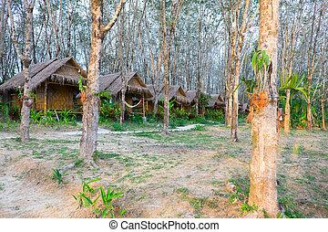 arbres., île, 7.12.2014, gibea, thaïlande, kho, phayam
