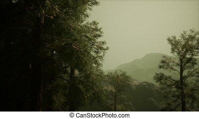 arbres, accidenté, venir, brouillard, pin, flanc montagne, ...