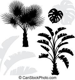 arbres, arrière-plan., silhouettes, paume, noir, blanc