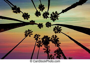 arbres, au-dessous, californie, santa, paume, barbara, vue