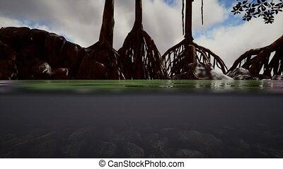 arbres, au-dessous, mangrove, mer, au-dessus, surface