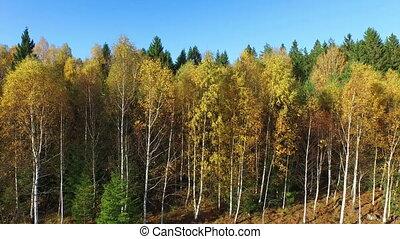 arbres, automnal, parc, coloré