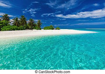 arbres bleus, exotique, paume, lagune, plage blanche, sablonneux