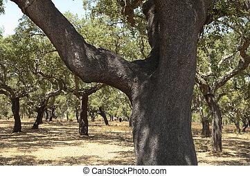 arbres, bouchon