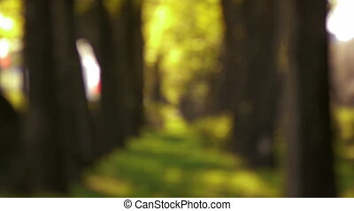 arbres, brouillé