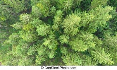 arbres, carpathian, conifère, vu, ukraine., aérien, montagnes