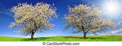 arbres cerise