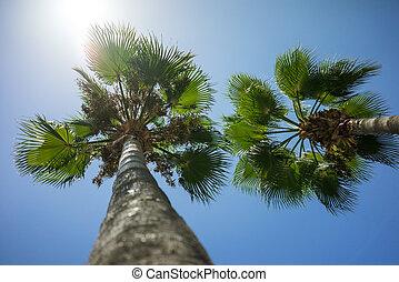 arbres, ciel, exotique, paume, vert bleu, ensoleillé, noix coco