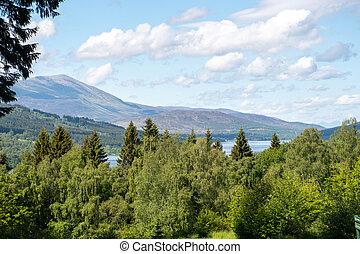 arbres, collines, écossais, premier plan, vue