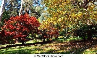arbres, couleurs, beau, automne