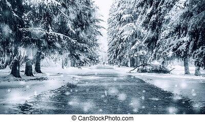 arbres, couvert, hiver, ensoleillé, route, neige, froid, parc, day.