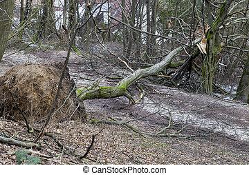 arbres, déraciné, orage, après