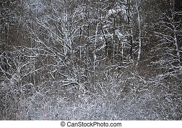 arbres, dans, hiver