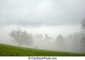 arbres, dans, les, brouillard
