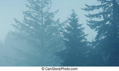 arbres, dans, lourd, brume, et, pluie