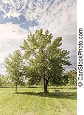 arbres, dans parc