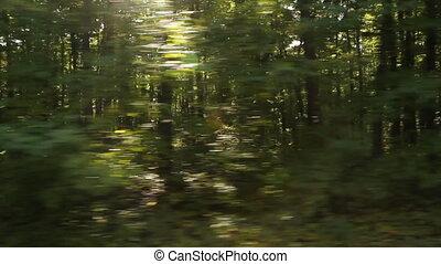 arbres., ensoleillé, driving.