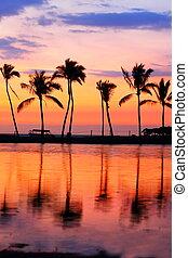 arbres, exotique, coucher soleil, paradis, plage paume