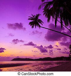 arbres, exotique, paume, thaïlande, plage, coucher soleil