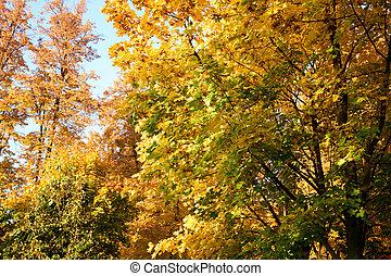 arbres, forêt automne, foliage.