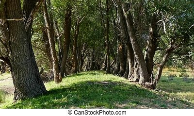 arbres, forêt, entre, équipez course, sentier, saule