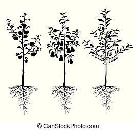 arbres fruitiers, ensemble, racines, plant, jeune