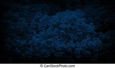 arbres, grand, forêt, nuit, fort, vent