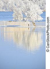 arbres hiver, couvert givre