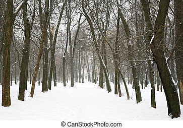 arbres hiver, dans ville, parc