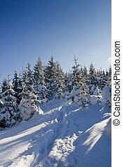 arbres hiver
