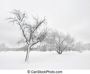 arbres, hiver, tempête neige