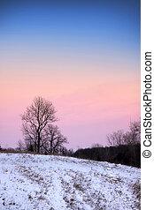 arbres hiver, temps