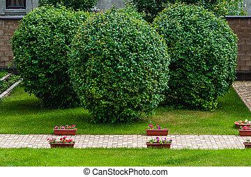arbres, jardin, manucuré